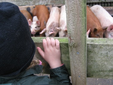 Kinderen Daycare Centre Farm trip